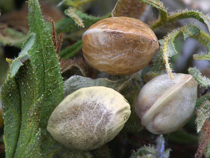 img-seedshop